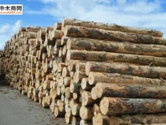 原木供应不足 澳洲最大木材加工厂面临裁员
