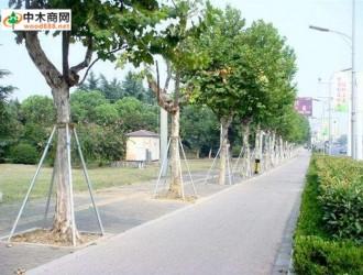 苗木移植支柱