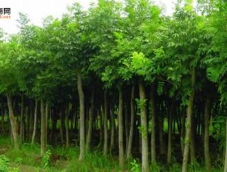 苗木主要品类