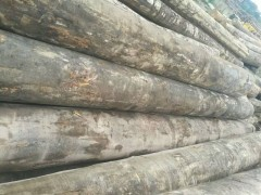 厂家直销优质沙比利原木可挑可通货认准上海达显进出口有限公司