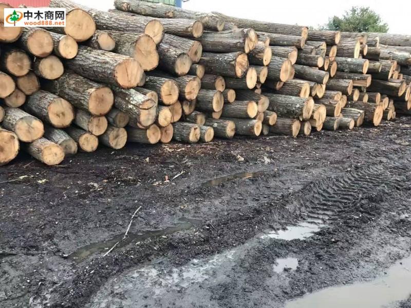 宾州纽约州红橡刨切原木