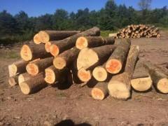 进口白蜡木原木防腐防虫厂家联系方式