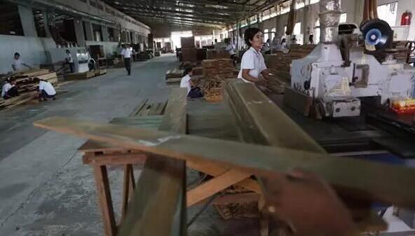 【缅甸将恢复木材生产
