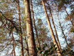 湖南杂木山林出售,各种杂木大量有货