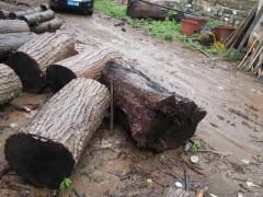 大径核桃木原木大量供应
