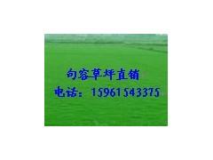 草坪低价供马尼拉草坪,天堂草坪百慕大草坪,黑麦草混播,果岭草