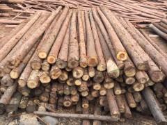 厂家直销柳杉原木批发均可加工定制