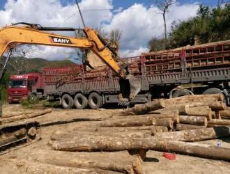 厂家直销进口油木原木首选云南缘明有限公司