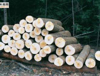 加拿大枫木