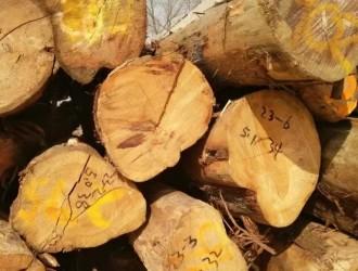 厂家专业批发千年油柏木,油性大,价格优