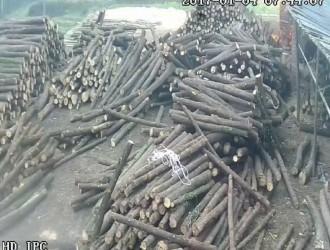 香柏木原木供应批发