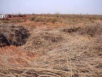 鄂尔多斯沙柳重组木、沙柳木型材、刨花板形成规模化产业