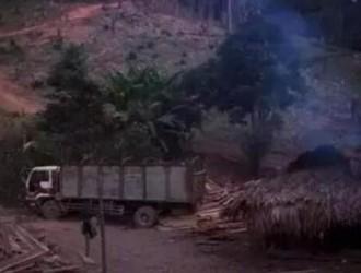 缅甸将恢复木材生产,生产目标预计达27万吨