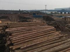 厂家直销柳杉原木领子4米4.4米5米
