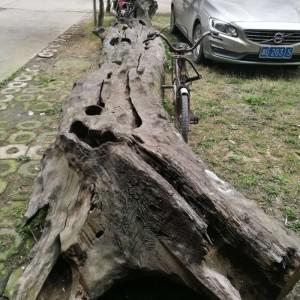 永康园林出售优质阴沉木原木,质优价廉