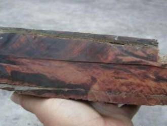 船木的主要木材树种介绍:坡磊木,红绸木,金丝李等