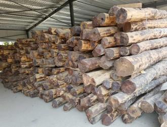仙游好林红木--产品图片