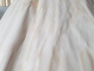 辐射松面皮