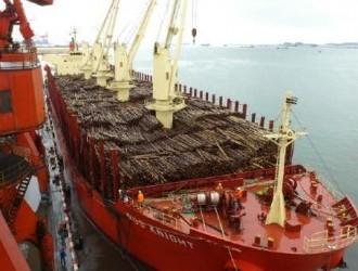 海运费用或将突破2500美金,运费飙升成为进口木材商的噩梦!