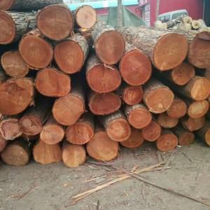 大量供应香椿(椿芽木,红椿)原木