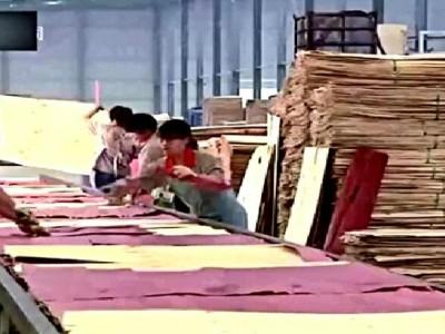 实拍中国工厂,胶合板生产全过程
