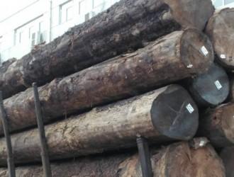 进口铁杉原木批发