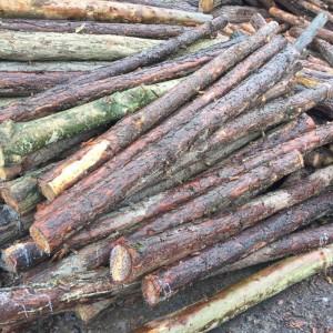 四川针叶松原木出售