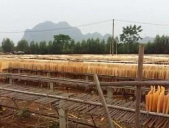 崇左市木材加工产业发展调研组到扶绥县专题调研