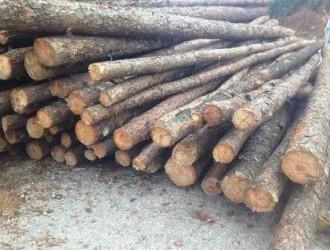 杉木价格多少钱一立方
