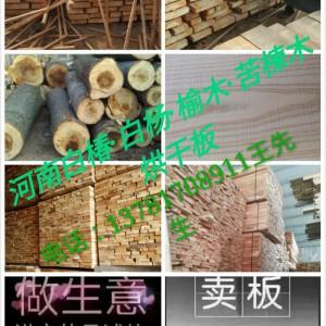 河南白杨木,白椿木烘干板材