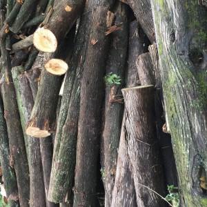 四川柏木原木供应