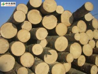 淡季来临 中国木材价格指数遭遇三连阴