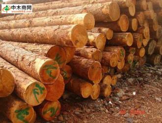 福建莆田市木材采运量大幅增长