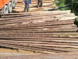 广东省信宜市茂林木业发展有限公司--杉木原木