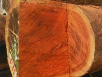 家具用材细考:古夷苏木(沉贵宝)的优点和缺点