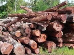 酸枝木锯材