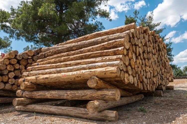做家具该懂的木材含水率你知道多少?