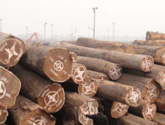 木材价格齐涨 行业或将面临洗牌