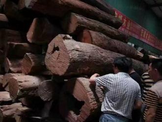 缅甸花梨大涨恐成定局 行业龙头老大狂扫2800吨!