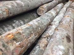木业最新供应160柜德国进口榉木原木现货 AB级 家居材