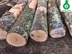 美国红橡木 纽约州 原木 高档家具 实木地板料