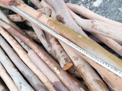 油茶木木料