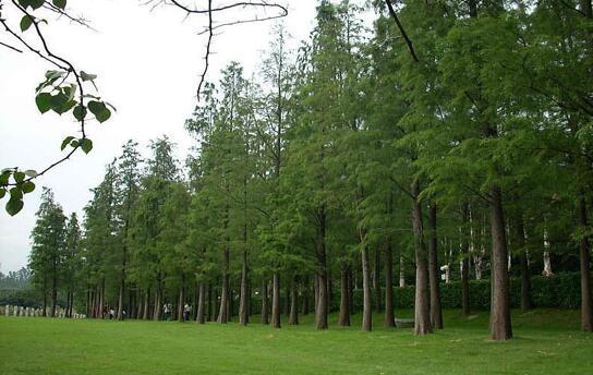 林业局:高度重视林木产品的质量提升和品牌建设工作