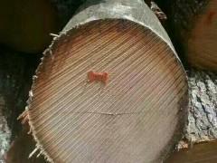 美国宾州产区红橡原木