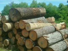 20柜宾州产区红橡原木