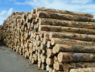 东南亚、非洲地区资源管控之下,南美原木价格被抬高,面临有价无市的局面