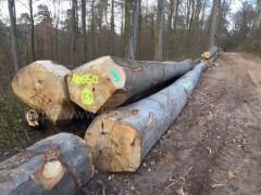 德国木业进口德国榉木原木AB级 数量有限回馈优惠 可锯切