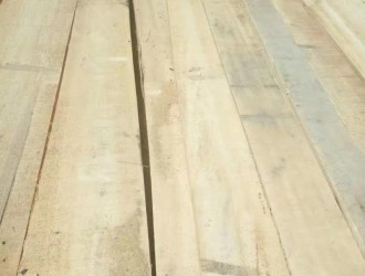 河南白杨木锯材首选河南建淼木业加工厂