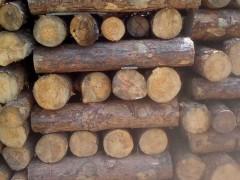 樟子松1米锯材料