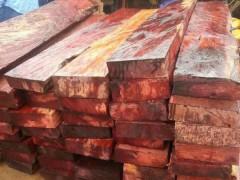 红豆杉方料,原木批发